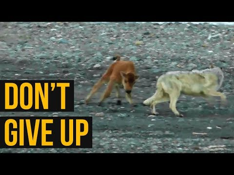Life Lessons: I Don't Give Up | Never Give up and Keep Going in Life